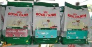RA��ES ROYAL CANIN   INDOOR JUNIOR   MINI JUNIOR E MINI ADULT